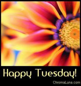 happy_tuesday_1277980547