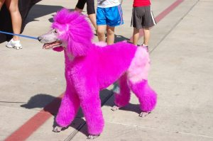Even the pets got their pink on! 2011 B4B