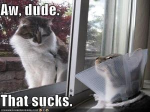 funny-pictures-cat-is-sympathetic-to-injury-of-friend