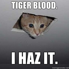 Ceiling-Cat-Tiger-Blood-I-haz-it
