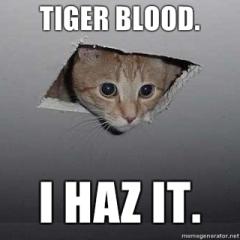 Ceiling-Cat-Tiger-Blood-I-haz-it